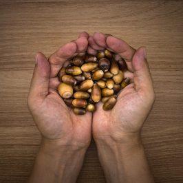 1 Hand voll Nüsse am Tag verlängert jedes Leben
